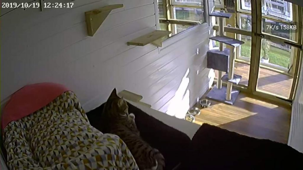 webcam view of a room in the Paddocks Luxury Cat Hotel