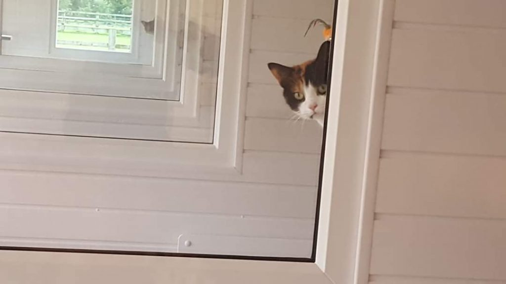 welcome to The Paddocks Luxury Cat Hotel